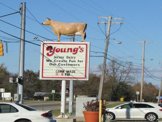 Young's Jersey Dairy Farm
