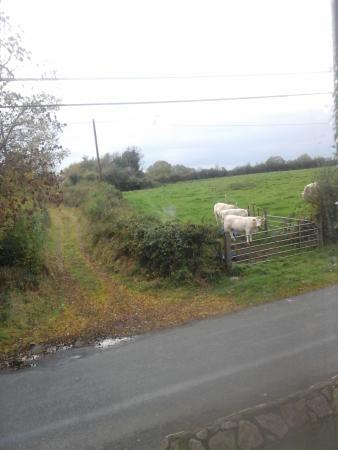 Ballymahon, Irland: The neighbours
