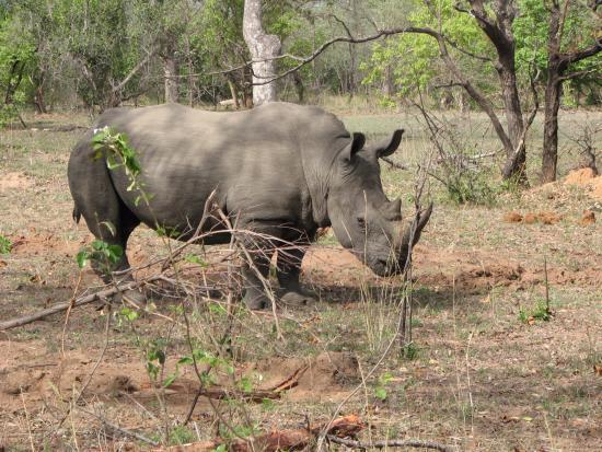 Leopard Hills Private Game Reserve, Sudáfrica: rhino
