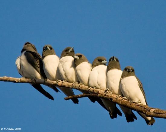 Lorella Springs Wilderness Park : Over 160 bird species recorded for the delight of bird watchers