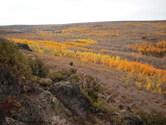 Frenchglen, OR: Fall colors on Steens Mountain