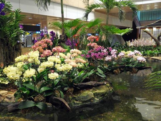 Orchid garden koi pond picture of orchid garden koi for Koi pool garden centre