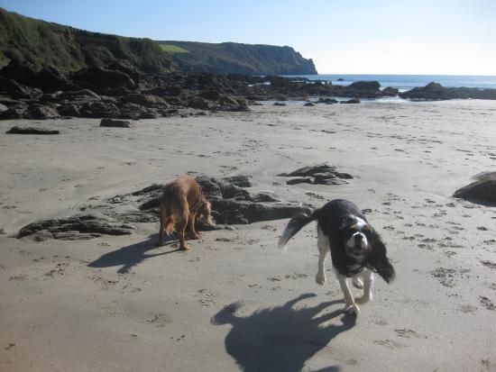 Veryan, UK: Carne beach - very dog friendly.