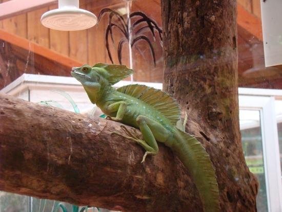 costa rica private tours native mini dragon