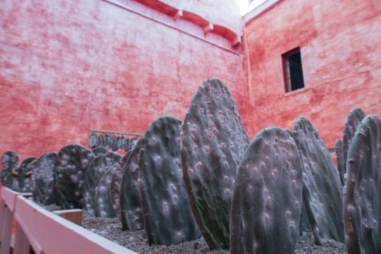 Museo de Arte Contemporaneo de Oaxaca (MACO): Cochineal farming comes to MACO