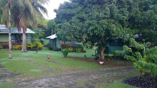 Ariana Bungalows: View of grounds & bungalows