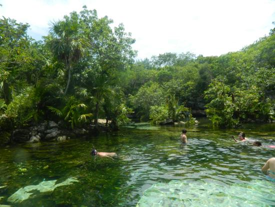 Jardin del eden picture of cenote jardin del eden for Jardin del eden