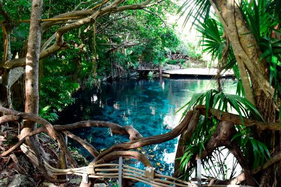 Cenote Picture Of Sandos Caracol Eco Resort Playa Del Carmen Tripadvisor