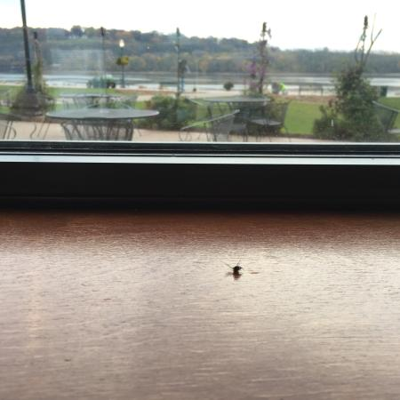 Tony Roma's : Breakfast with dead flies and what I ordered for breakfast was wrong.  Dinner was just as bad.