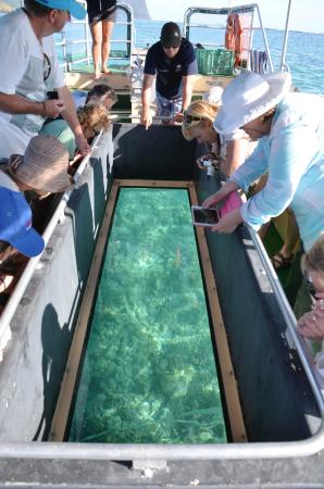 Marine Adventures: Viewing coral