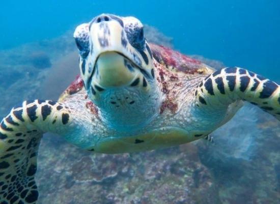 普吉岛安迪潜水体验
