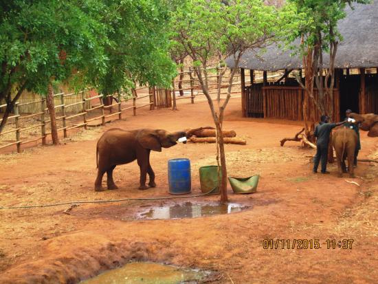 Elephant nursery - baby drinking bottle