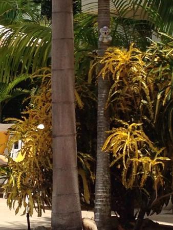 Island Palms Resort: Great pool lots of palm trees