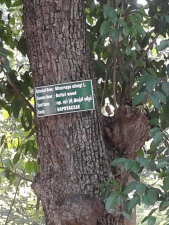Pondicherry Botanical Gardens: Botanical Garden   Labeled Tree