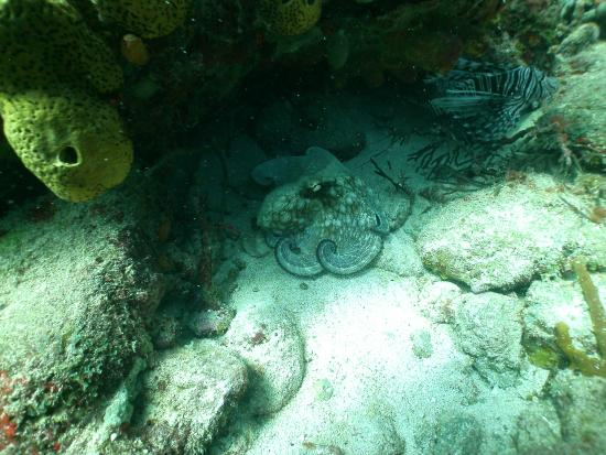 Simpson Bay, St. Maarten-St. Martin: OCTOPUS  SINT MAARTEN
