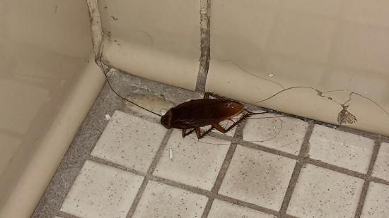 West Side YMCA: tote Kakerlake im Bad!!!!!