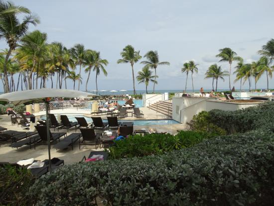 Iguana en la piscina - Picture of Caribe Hilton San Juan 180a0baff2d9f