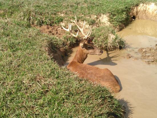 Catawissa, PA: Mud Bath