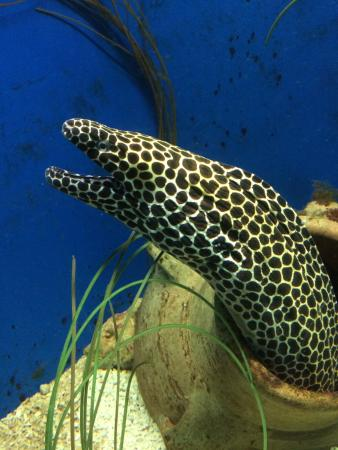... _large.jpg - Picture of St Andrews Aquarium, St Andrews - TripAdvisor