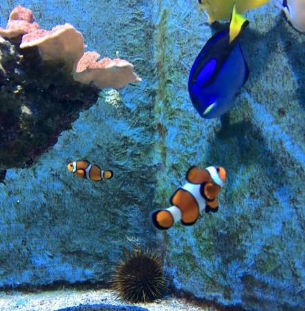 Img 20151105 131848 picture of sea life - Doris et nemo ...