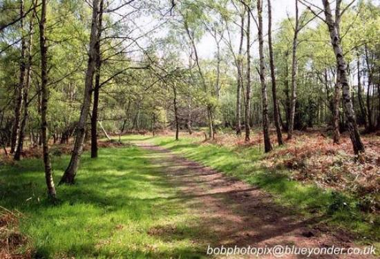 Wombourne, UK: Ahh, The Beautiful Woods!!