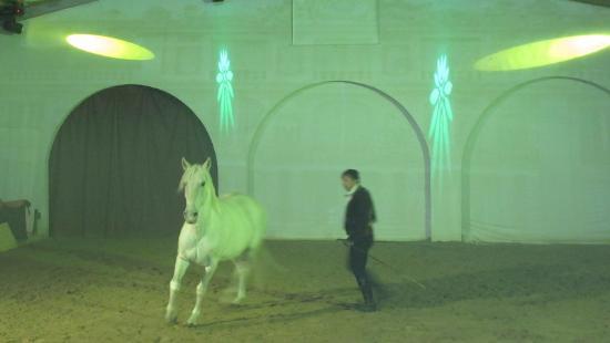 Cabaret Equestre des Dunes : cavalli