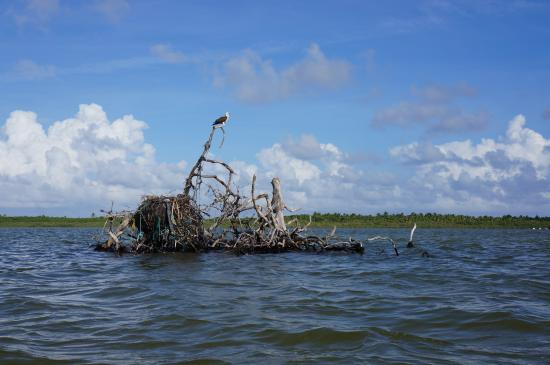 the nest of the osprey picture of mexico kan tours day tours