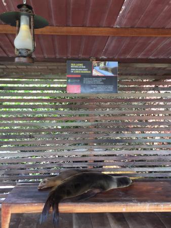 Red Mangrove Aventura Restaurant : photo0.jpg