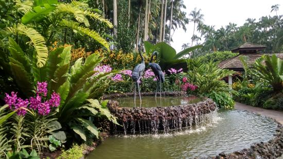 Jard n bot nico picture of singapore botanic gardens for Au jardin restaurant singapore botanic gardens