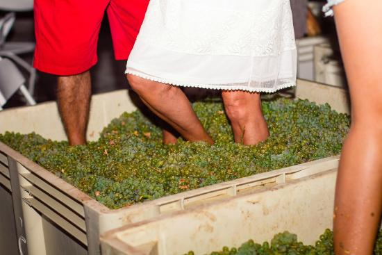 Sevtap Winery Tasting Room: Annual Grape Stomp Party