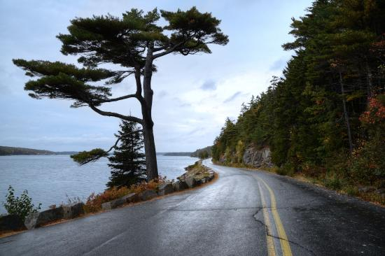 Mount Desert, ME: Rainy autumn day along Sargent Road.