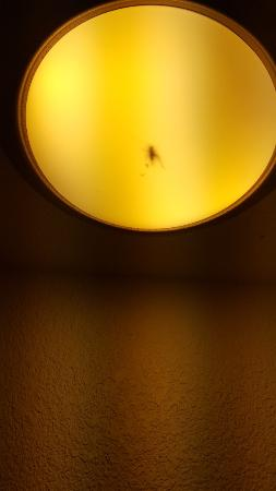 Death Valley Inn: Bug In The Light Above The Sink