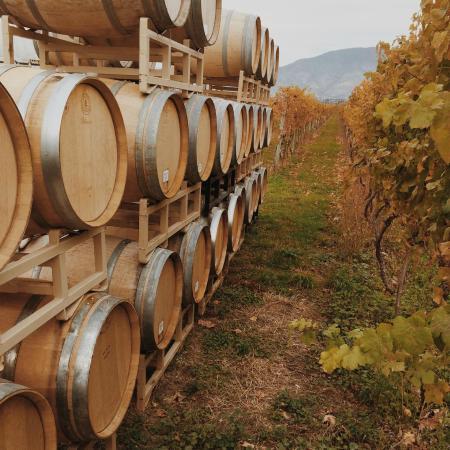 Stoneboat Vineyards : Barrels at the Orchard Grove Vineyard