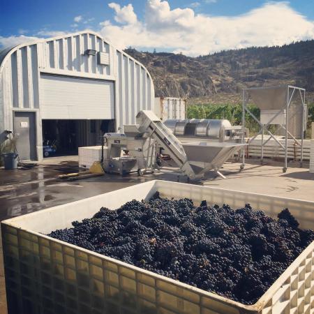Stoneboat Vineyards : Crushing Pinot Noir