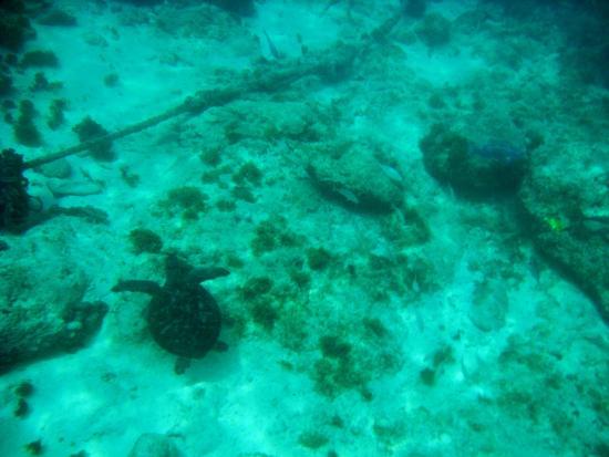 Aruba Snorkeling Shipwreck