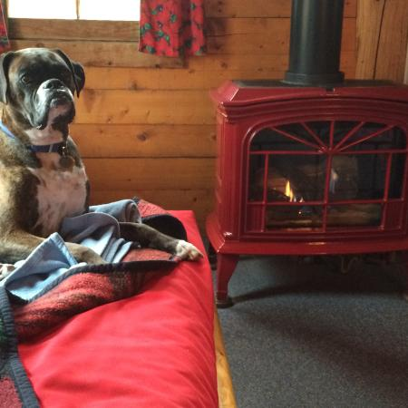 Avalanche Ranch: Miss B enjoying the gas fireplace