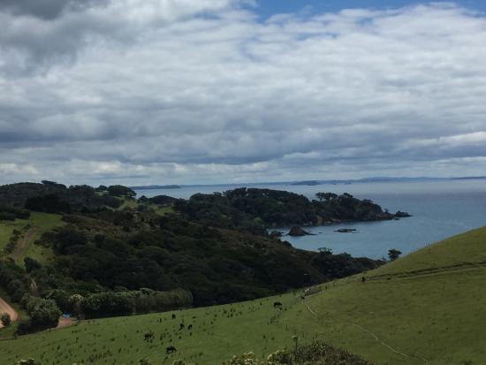 Waiheke-øya, New Zealand: photo2.jpg