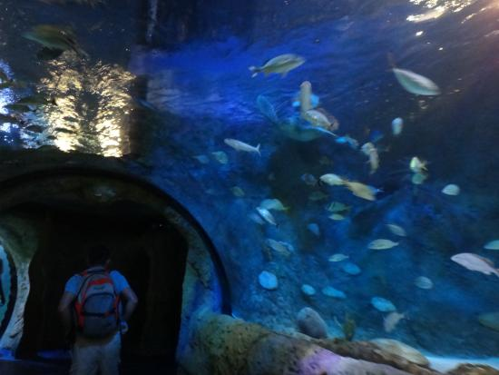 Lindo Picture Of Sea Life Orlando Aquarium Orlando Tripadvisor