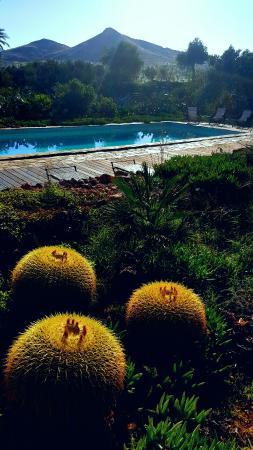 El jardin de los suenos picture of el jardin de los - El jardin de pedraza ...