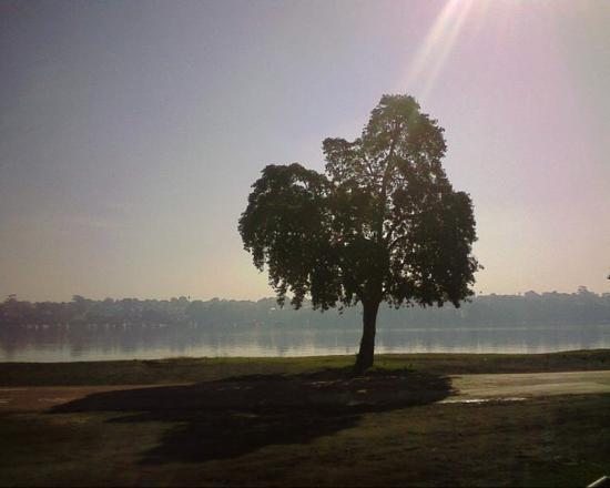 Callan Park