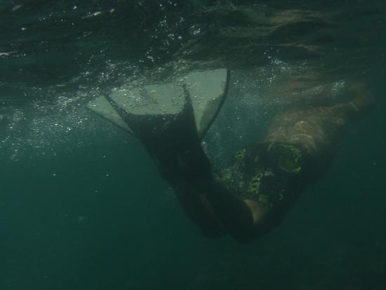 Samui Windsurf: et du monopalme