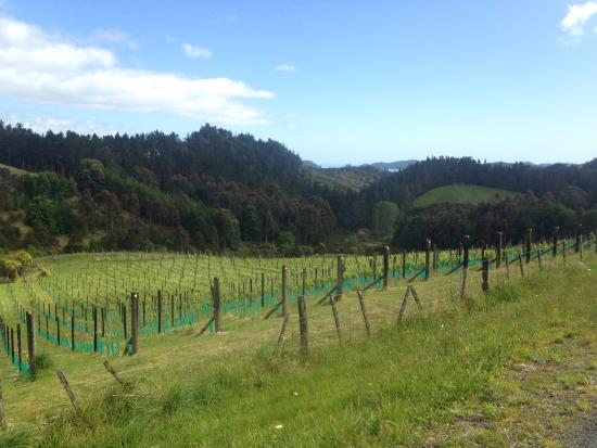 Paroa Bay Winery : photo0.jpg