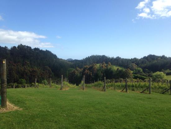 Paroa Bay Winery : photo1.jpg