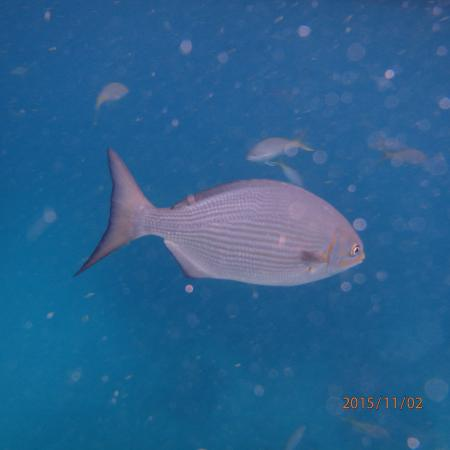 Strike Zone Charters: One of many species of fish up close and personal