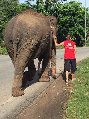 A spasso - Foto di Elephantstay, Ayutthaya - TripAdvisor