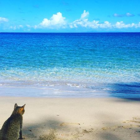 Cap Estate, Saint Lucia: Cat Maison