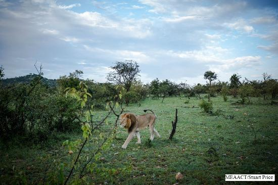 Porini Mara Camp: Wildlife on Ol Kinyei Conservancy