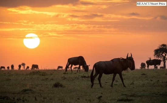 Porini Mara Camp: Wildlife on Ol Kinyei Conservancy