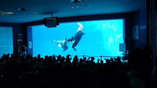 ... ?????? - Picture of Port of Nagoya Public Aquarium, Nagoya