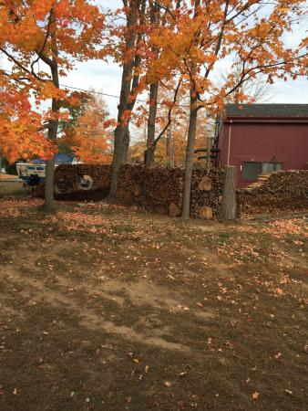 Essex, CT: View from the train of a wood pile that had a bicycle in the mix